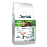Ontario Cat Adult Castrate